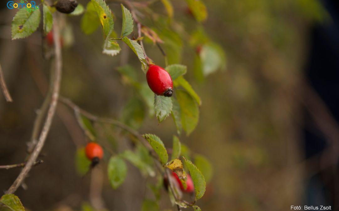 Terméstúrával nyitották az őszi túraszezont