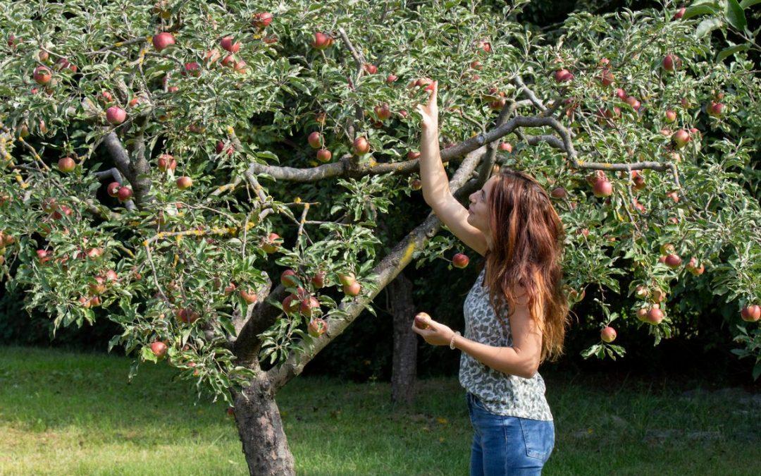 Lakossági gyümölcsfa-ültetési akció